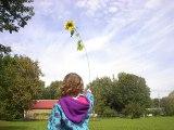 MIDDLEBURY, VT - Back yard sunflower parade