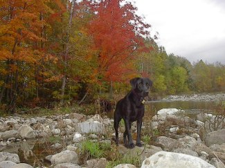 MIDDLEBURY, VT - Scout and I about to cross the Middlebury River. October 2004